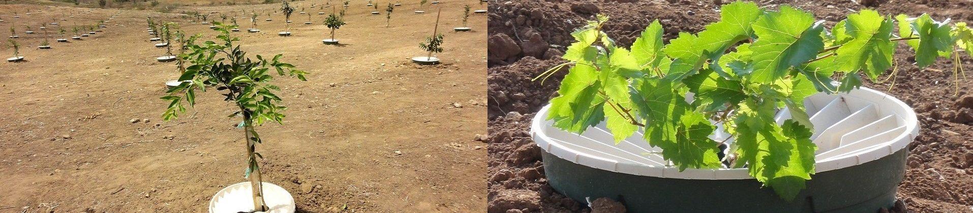 plantar zona arida