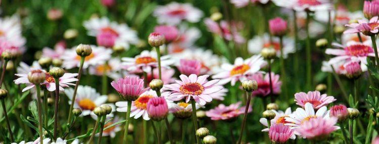 flores-jardin-margarita