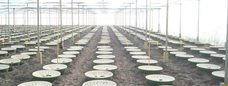 tierra para cultivo de huerto con Waterboxx