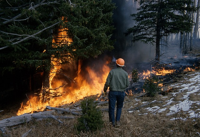 incendios forestales / forest fires