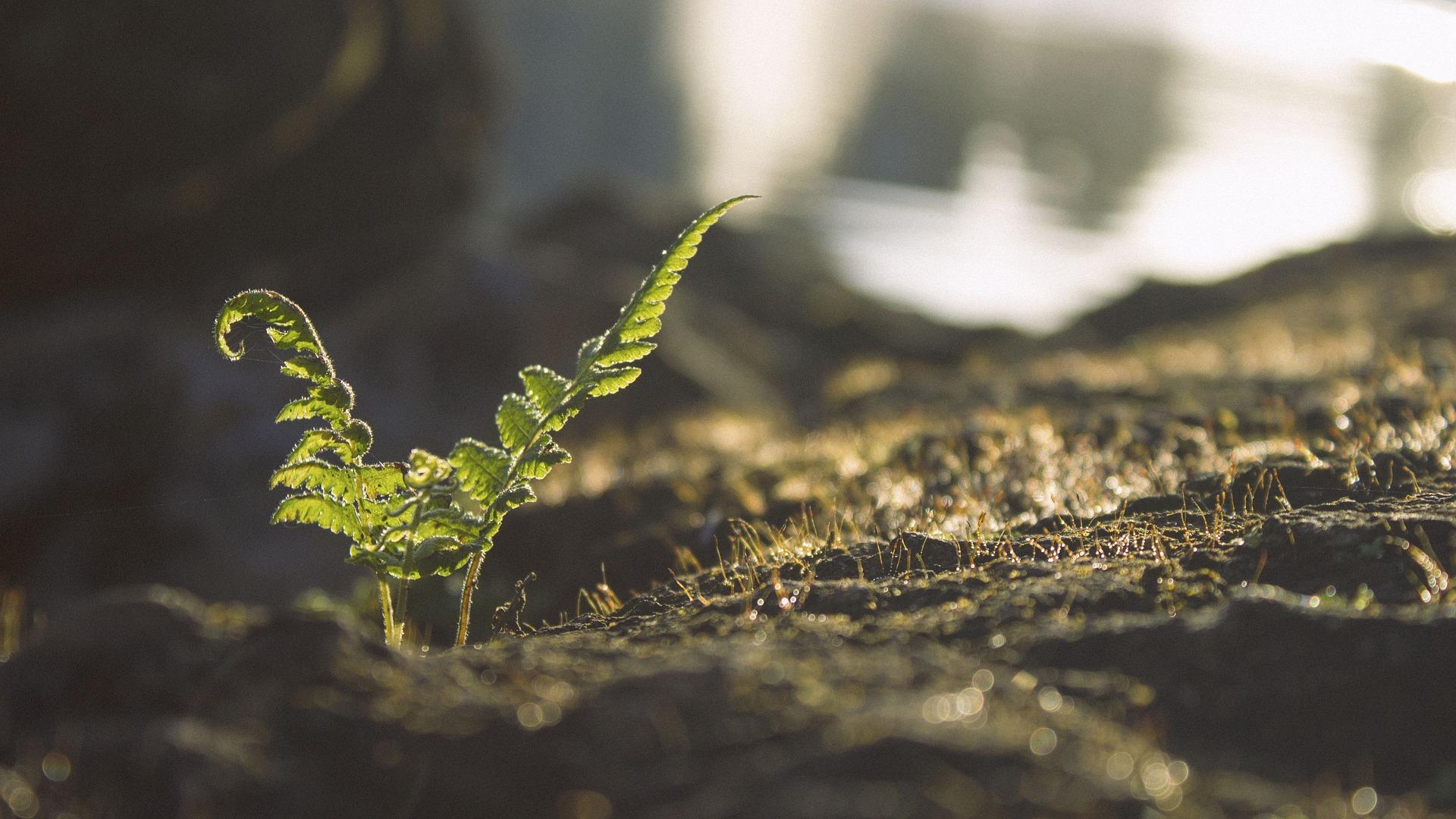 como acidificar el suelo