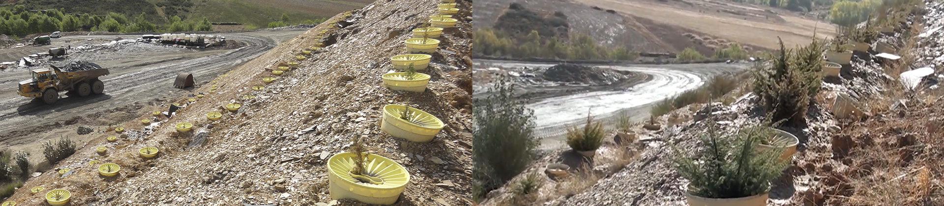 plantar con Waterboxx en mina de Zamora 5 años después