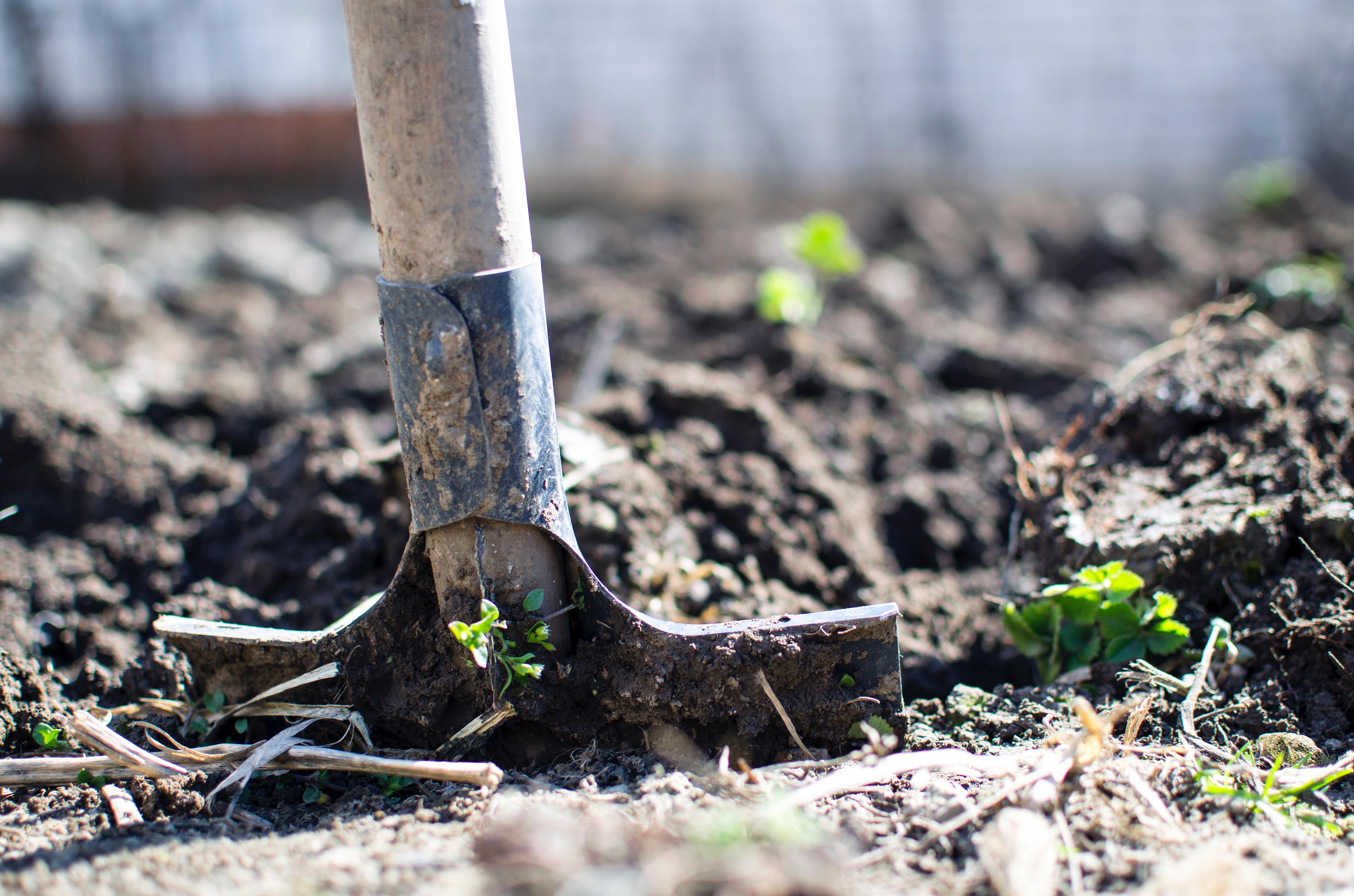 Como cuidar tus plantas en verano